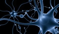 Mozek v kondici
